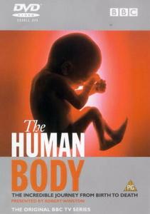 subtitrare The Human Body (1998)