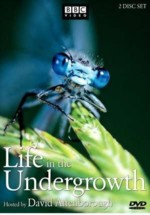 subtitrare Life in the Undergrowth (2005)