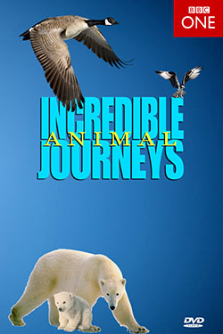 subtitrare BBC - Incredible Animal Journeys (2013)