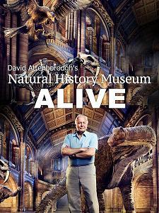 subtitrare David Attenborough`s Natural History Museum Alive (2014)