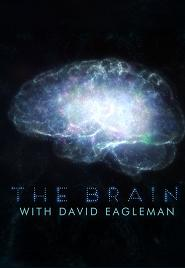 subtitrare The Brain with Dr. David Eagleman (2015)