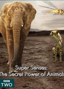 subtitrare Super Senses: The Secret Power of Animals (2014)